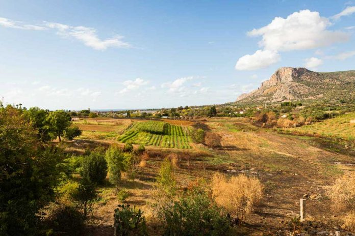 cnh-The-creation-of-a-food-forest-reproducing-the-natural-eco-system-in-Sicily